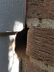 Rodent Proofing by Trapper John Animal Control
